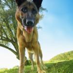 pet medical insurance