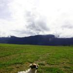 Read Petplan Pet Insurance Reviews here