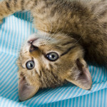 read sheltercare pet insurance reviews here